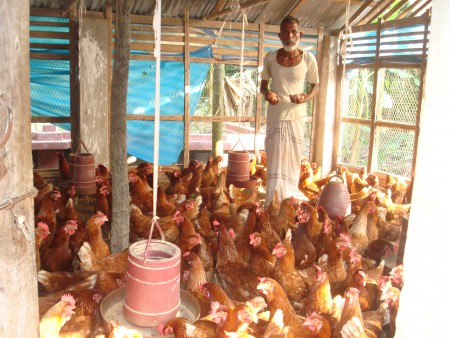 Poultry Livestock Development Program